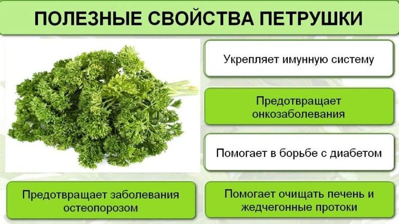 Почему в России запретили петрушку: присутствуют ли в растении наркосодержащие вещества