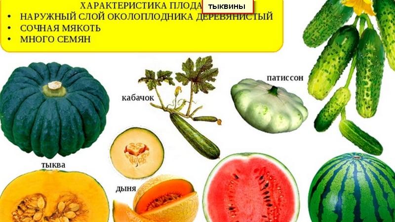 Арбуз это ягода или фрукт