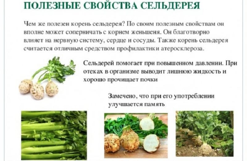Корень сельдерея: как употреблять в пищу для похудения и лечения