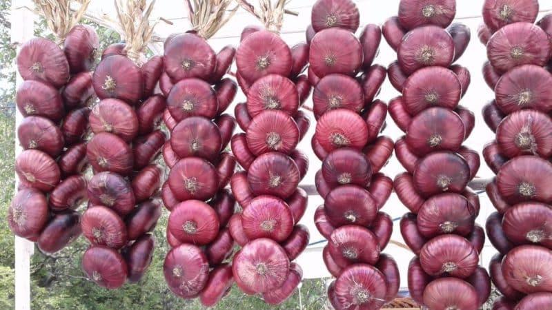 Чем так хорош ялтинский лук и как отличить его от подделки