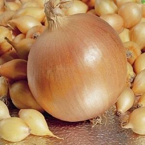 """Гибрид лука """"Геркулес"""": можно ли сажать под зиму и особенности выращивания"""