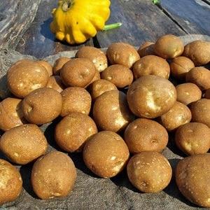 Идеальный сорт картофеля для пюре
