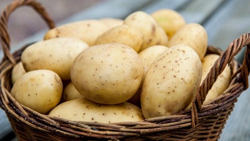 Как проявляется аллергия на картофель у детей и взрослых