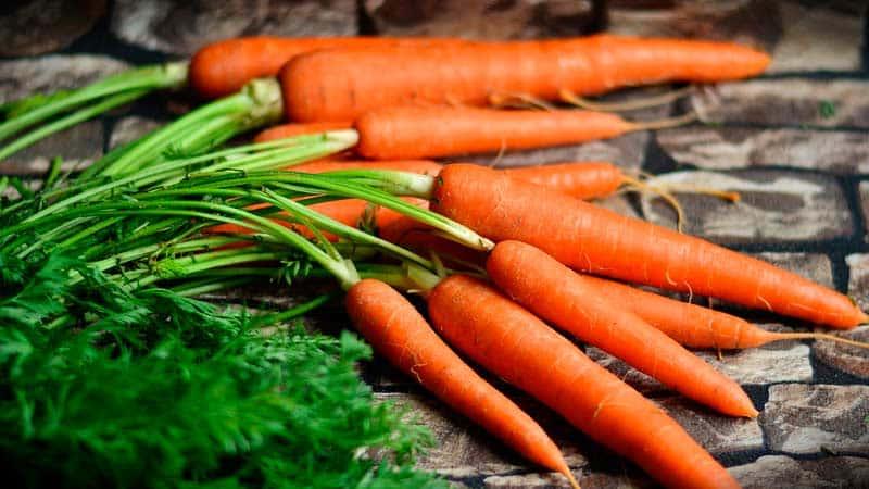 Какую морковь посадить в Подмосковье: лучшие сорта для открытого грунта