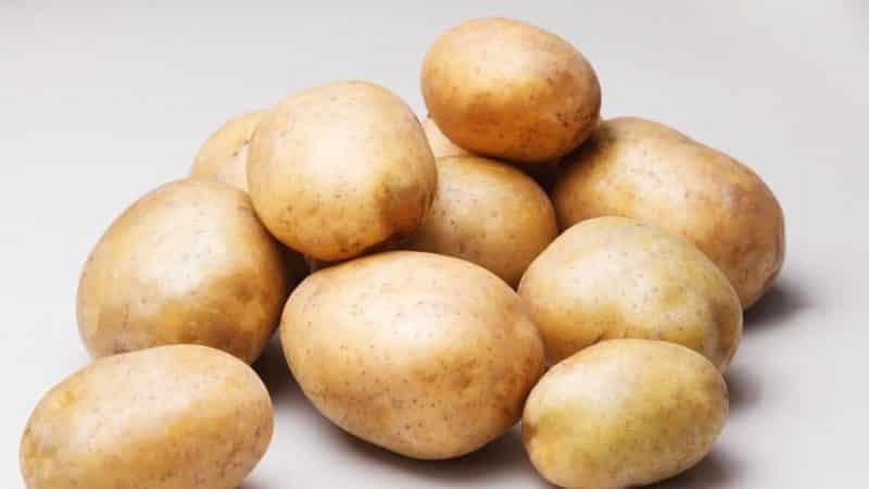"""Среднепоздний столовый сорт картофеля """"Рагнеда"""", адаптирующийся к любой почве"""