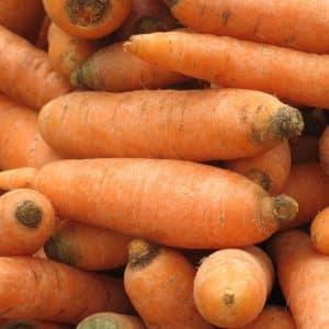 Неприхотливый сорт моркови Витаминная 6