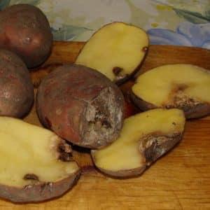 Особенности хранения картошки: при какой температуре она замерзает