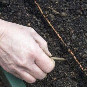 Особенности подготовки грядки под морковь осенью