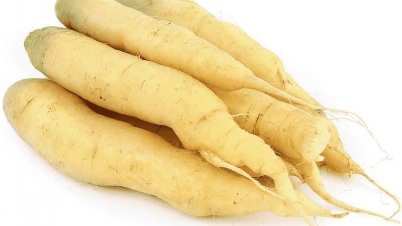 Сорта белой моркови и их полезные свойства для организма человека