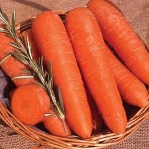 Среднеранний сорт моркови с повышенным содержанием каротина: Детская сладкая