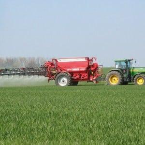 Удобрения для озимой пшеницы: чем подкормить осенью