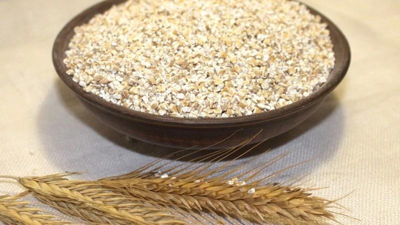 В чем разница между ячменем, пшеницей и другими злаками