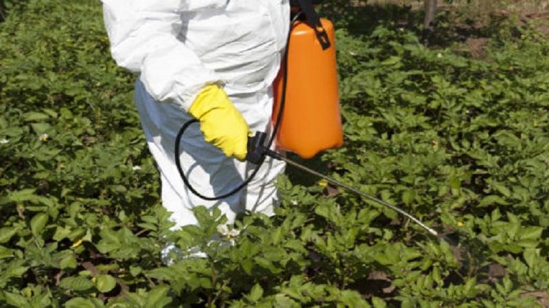 """Как избавиться от сорняков на картошке с помощью """"Лазурита"""" или его аналогов"""