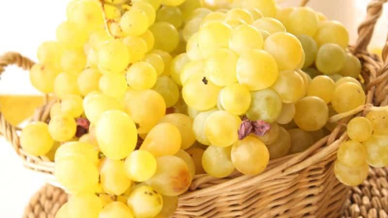 Готовим изумительную квашеную капусту с виноградом по лучшим рецептам