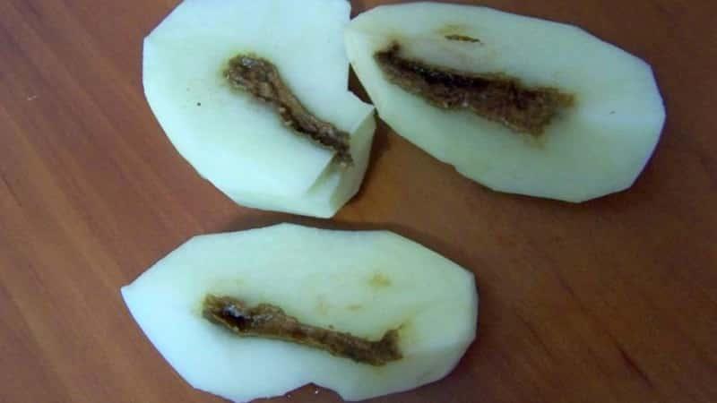 Что делать, если картошка внутри стала пустая и почему так происходит
