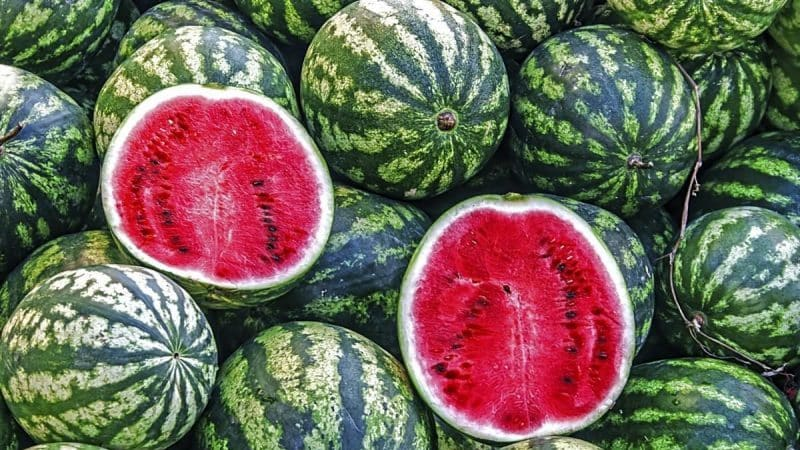 Что такое арбуз: к какому семейству относятся плоды, какие бывают и чем полезны