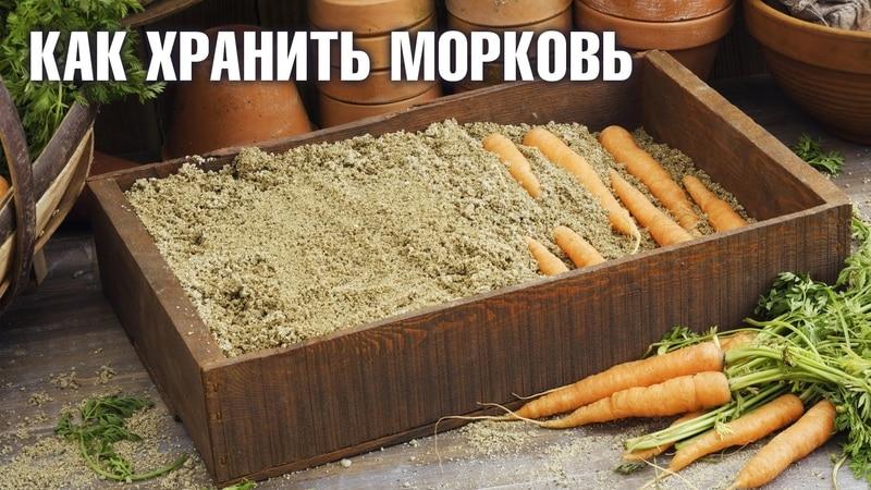 Преимущества и недостатки хранения моркови в песке, пошаговая инструкция