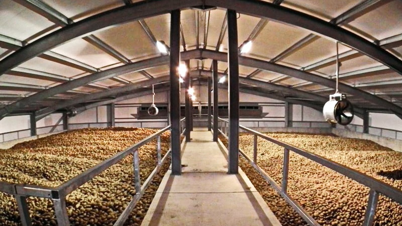 Нюансы хранения картофеля в овощехранилище: как создать оптимальные условия для урожая