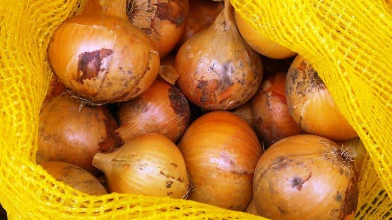 Особенности выращивания и посадки лука-севка