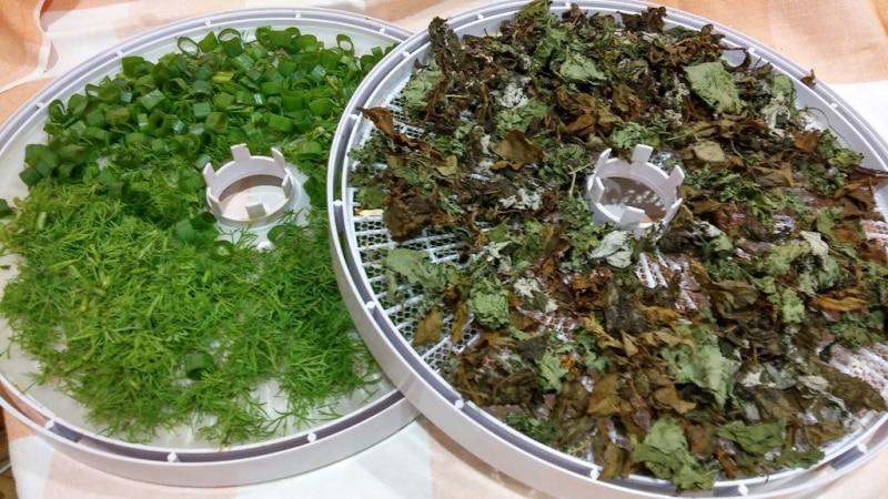 Пошаговые рекомендации: как высушить зеленый лук на зиму в домашних условиях