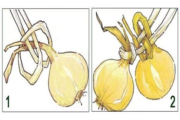 Пошаговая инструкция: как заплести лук в косы для хранения
