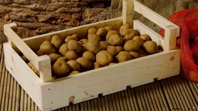 Какой максимальный срок хранения картофеля и как его продлить