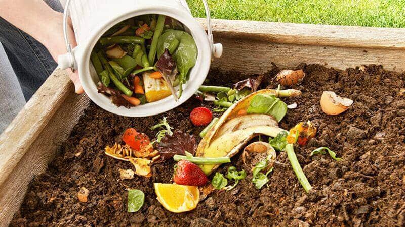 Для каких растений можно использовать картофельные очистки в качестве удобрения