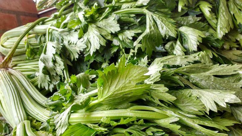 Лучшие рецепты заготовки листового сельдерея на зиму