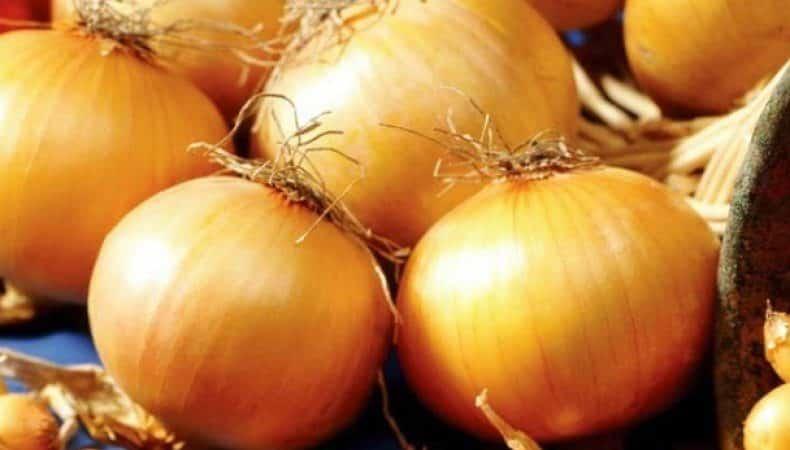 """Высокоурожайный гибрид лука с потрясающим вкусом – """"Центурион"""""""