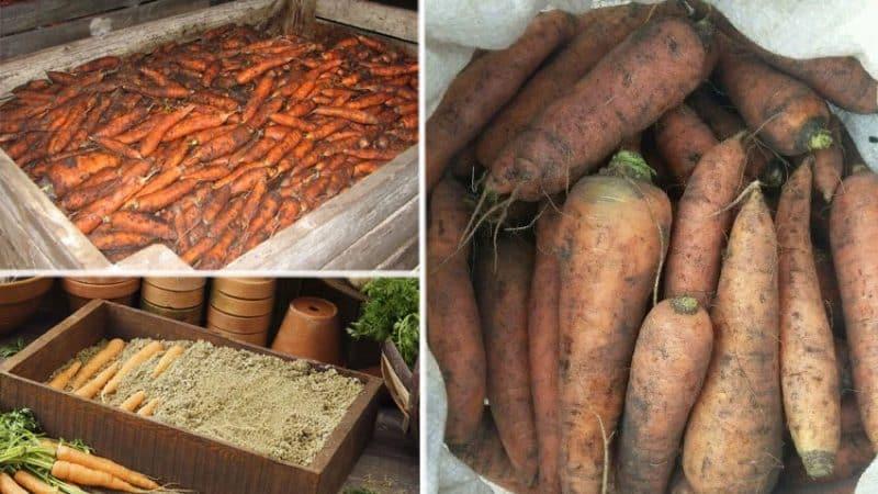 Особенности хранения моркови в домашних условиях в квартире