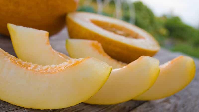 Польза и вред дыни для здоровья печени