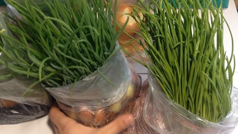 Технология посадки и выращивания лука в пакете без земли - супер способ!