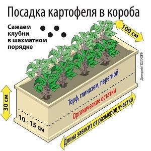 Пошаговое руководство по выращиванию картофеля в ящиках и коробах