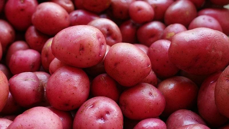 Превосходный вкус красного картофеля: в чем его особенности и какие бывают виды