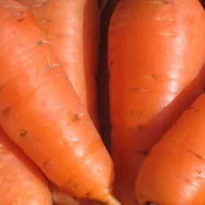 Высокоурожайный сорт моркови Курода с длительным сроком хранения