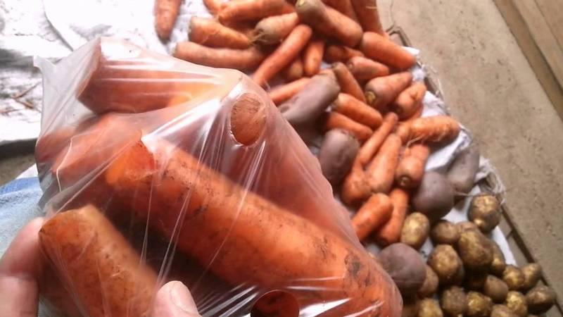 В чем и как хранить морковь в погребе зимой: подборка лучших способов