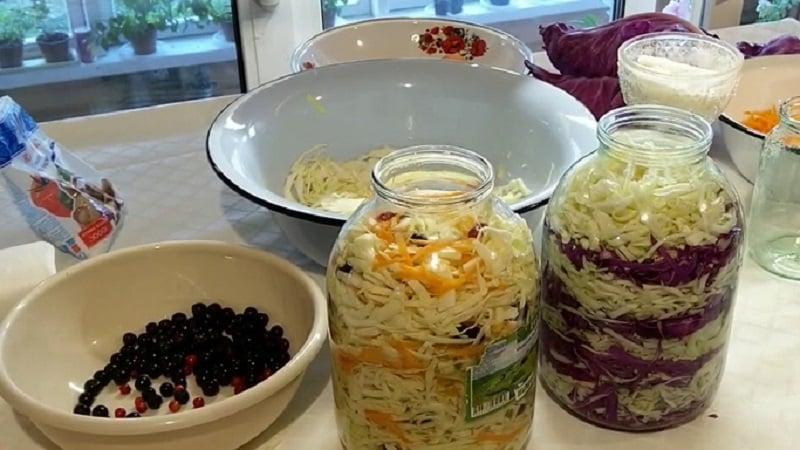 Рецепты очень вкусной квашеной капусты в 3 литровых банках на зиму и рекомендации по хранению закуски
