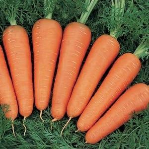 Сколько крахмала содержится в моркови