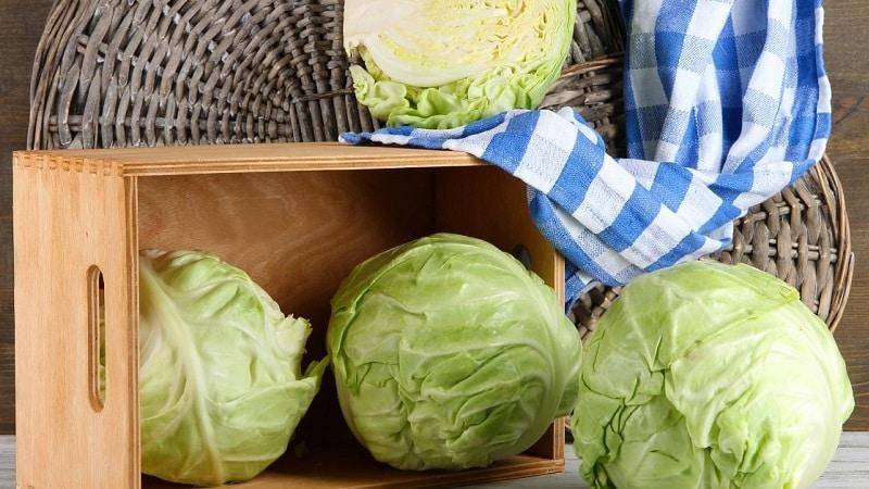 Где и как хранить капусту в домашних условиях в квартире в свежем виде