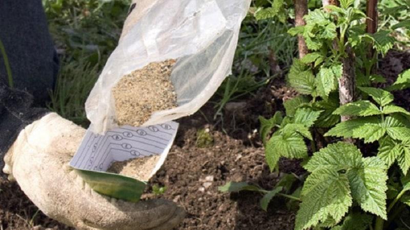 Как правильно проводить обработку малины осенью: описание самых важных этапов