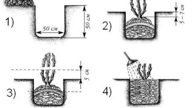 Инструкция по посадке крыжовника осенью и дальнейшему уходу за ним