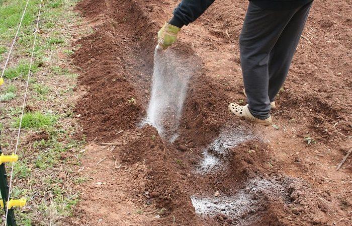 Готовим почву к посадке картофеля: какая нужна кислотность земли