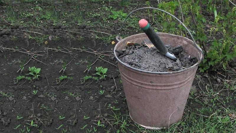 Как правильно подкормить крыжовник весной