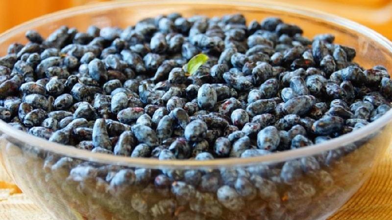 Как можно заморозить жимолость на зиму в виде сока, пюре или цельных ягод