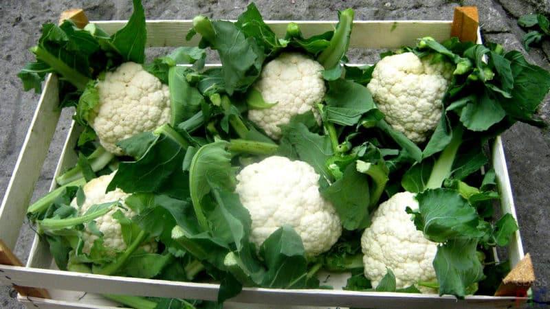 Лучшие способы, как сохранить цветную капусту на зиму в домашних условиях