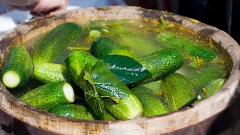 Особенности засолки огурцов на зиму в бочке: рецепты соления холодным способом