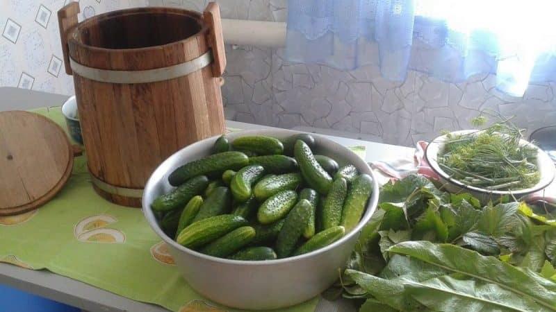Особенности и рецепт засолки огурцов на зиму холодным способом в бочке