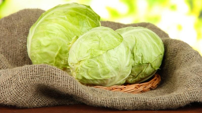 Как сохранить капусту в свежем виде на зиму, как правильно хранить в домашних условиях, температура хранения белокочанной капусты зимой