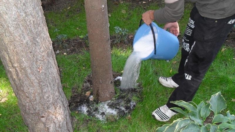 Руководство по подкормке груши осенью для начинающих садоводов