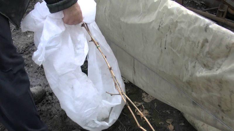 Укрываем виноград на зиму в сибири материалы